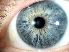 iridology: the study of the iris