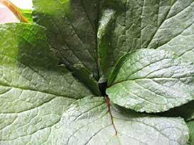 nutritional herbalism