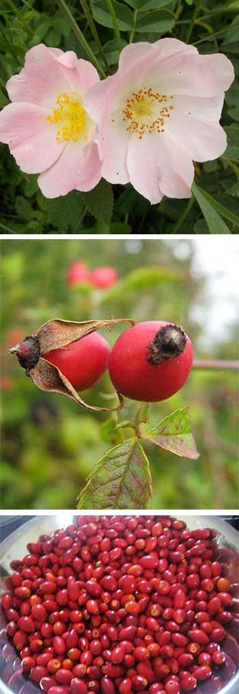 Wild Rosehip Vinegar