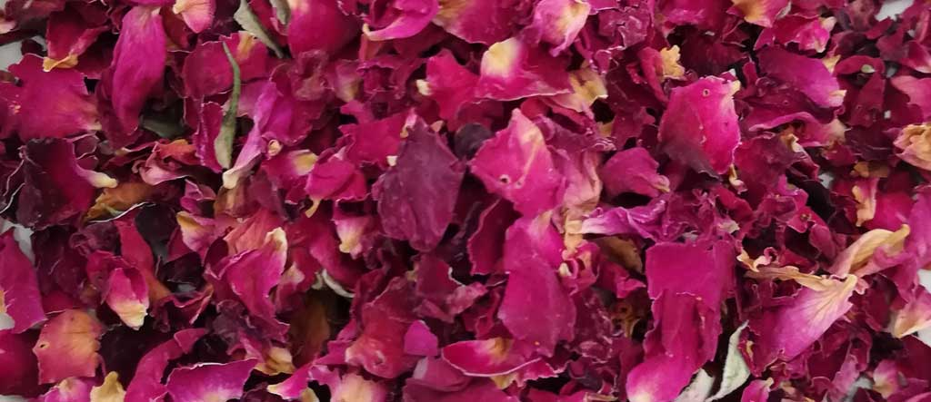 red rose petal dried